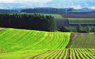 Как взять землю в аренду у государства под бизнес в 2020