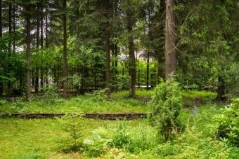 Аренда лесного участка в 2020 - под вырубку, для геологического изучения недр, для рекреационных целей