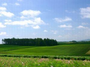Как оформить пай земли в собственность в 2020 - по наследству, не собственнику, если нет документов
