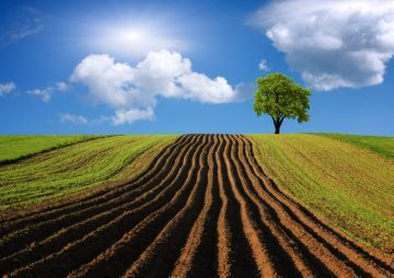 Предоставление земельного участка в аренду без торгов в 2020 - заявление, инвалидам, КФХ, для огородничества