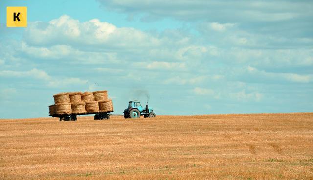 Как взять землю в аренду у государства под сельское хозяйство в 2020 - цена, ИП